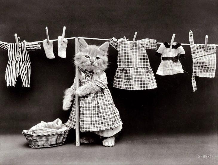 gatita tendiendo la ropa