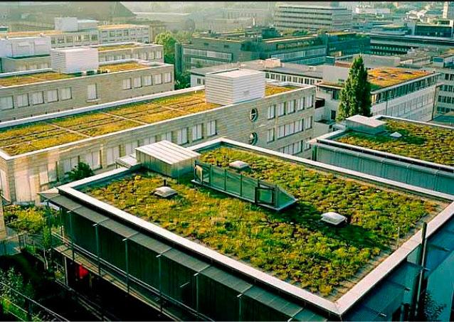 techos en los que se cultiva en las universidades