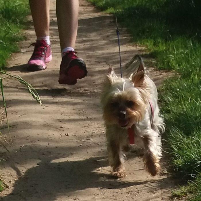 perrito corriendo con su dueña de tennis rosas