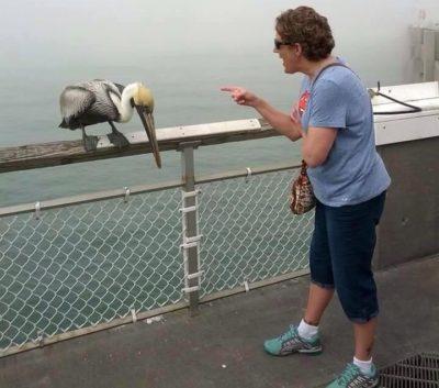 Abuela regañando a pelícano que al parecer la mordió