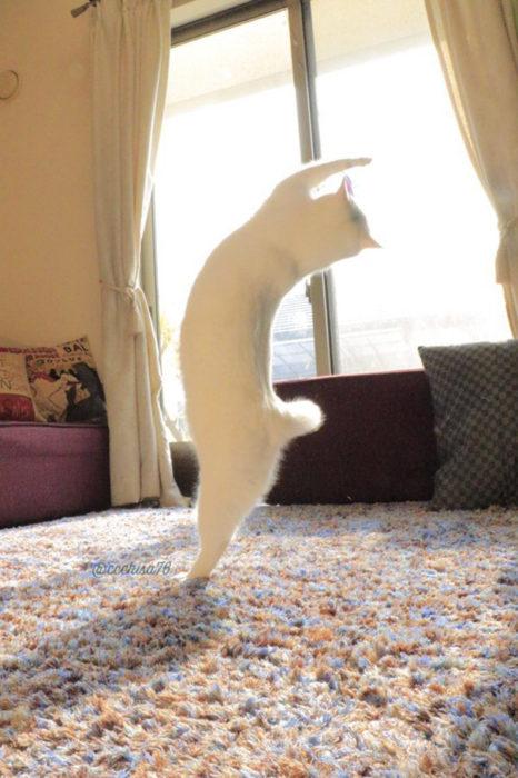 gato haciendo giro