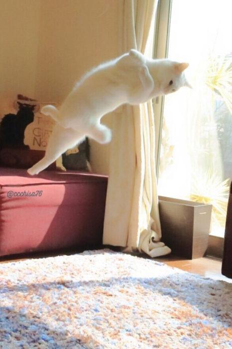 gato girando en el aire