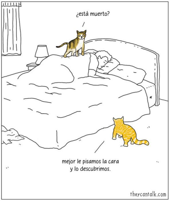 gatos con dueño al dormir