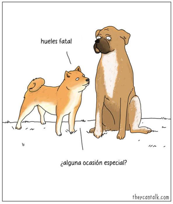 perros hablando entre sí
