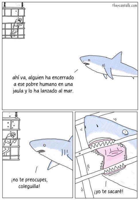 tiburon cerca de reja con humano