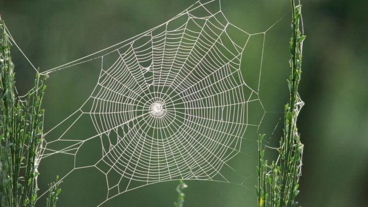 Una perfecta tela de araña