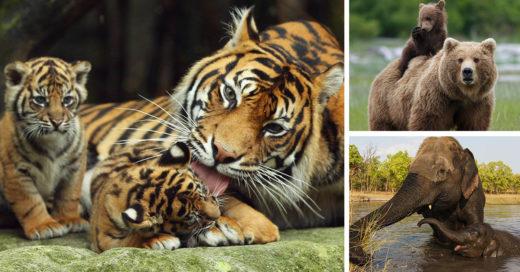 Datos curiosos de animales salvajes con sus crías