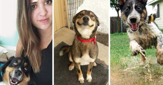 Razones por los que nuestros perros son nuestros mejores amigos
