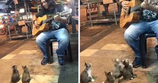 Adorables gatitos escuchan a músico callejero