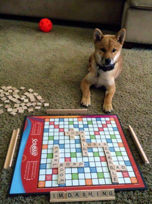 Hombre juega scrabble con su perro