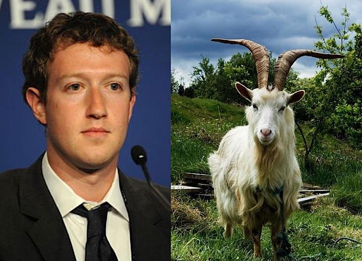 Zuckerberg vegie