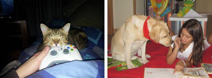 Gato se queda dormido mientras su dueño juega; perro pone atención mientras su dueña le cuenta un cuento