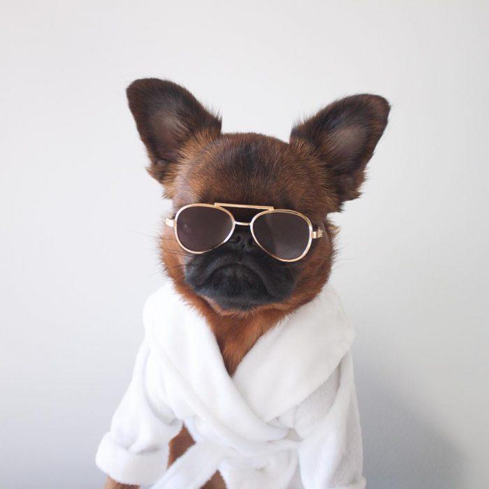 perro con lentes y bata blanca