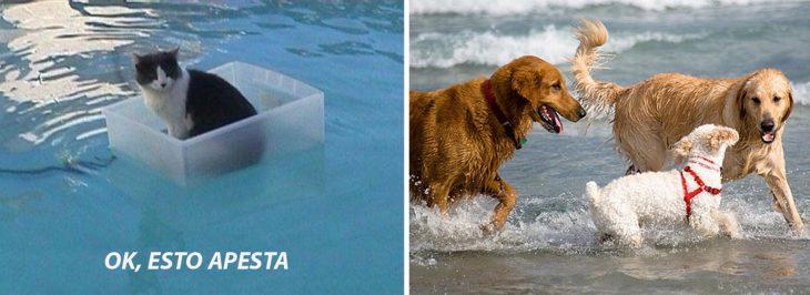Gato flotando en el agua adentro de un recipiente de plástico; perros jugando en el mar