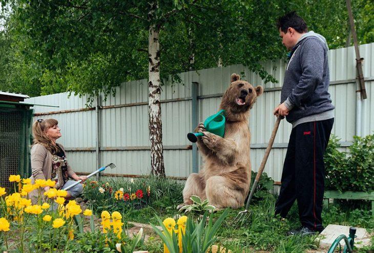 oso regando las plantas con humanos
