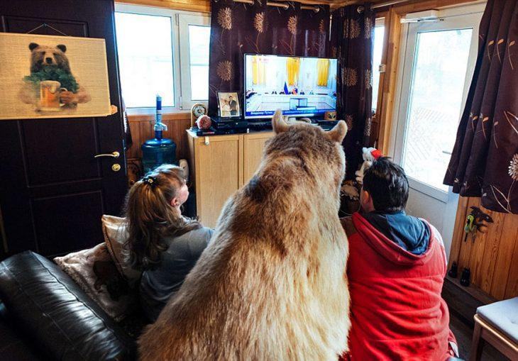 oso viendo televisión