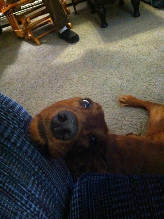 Perro mirando a su dueño con cara de amor