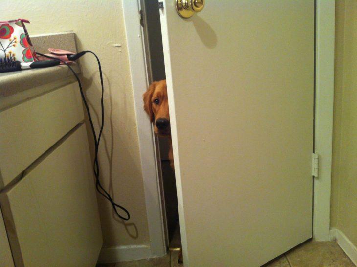 Perro asomándose mientras su dueño está en el baño