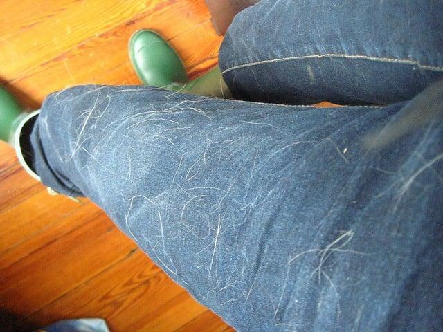Pantalón de mezclilla lleno de pelos de perro