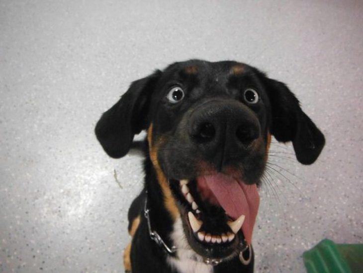 Perro con cara de emoción/feliz