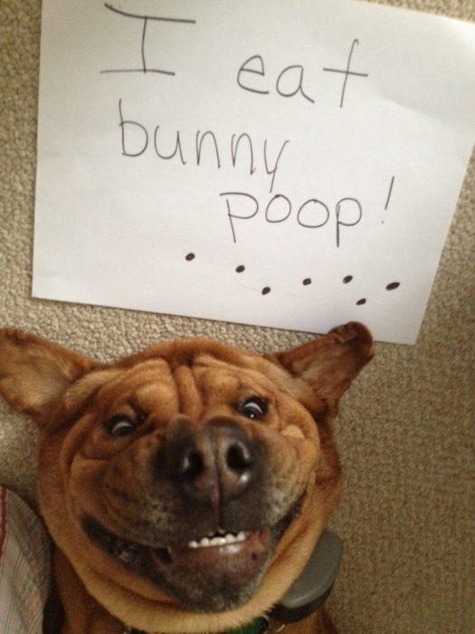 Perro sonriendo con un letrero arriba de su cabeza que dice: I eat bunny poop