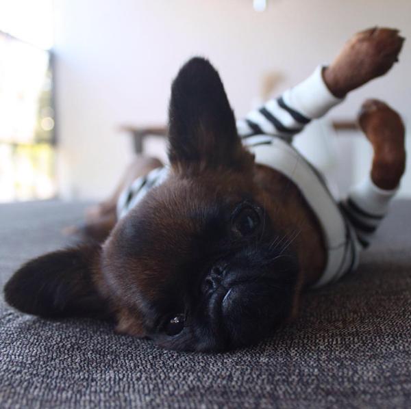 perro acostado boca arriba en alfombra