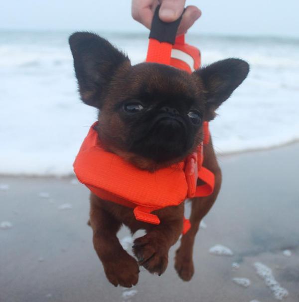 perro en la playa con salvavidas
