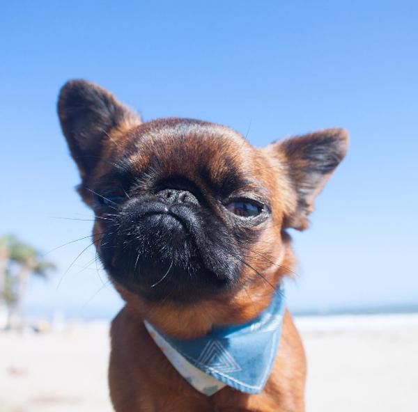 perro con paliacate azul en la playa