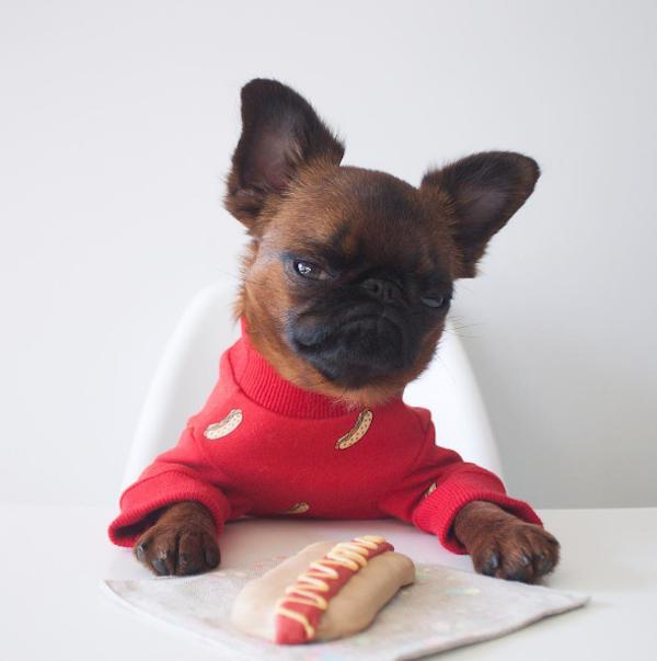 perro con galleta con forma de hot dog