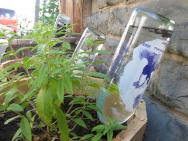 dispositivo para regar plantas