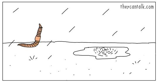 gusano en la lluvia