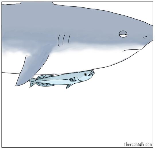 tiburon y pez