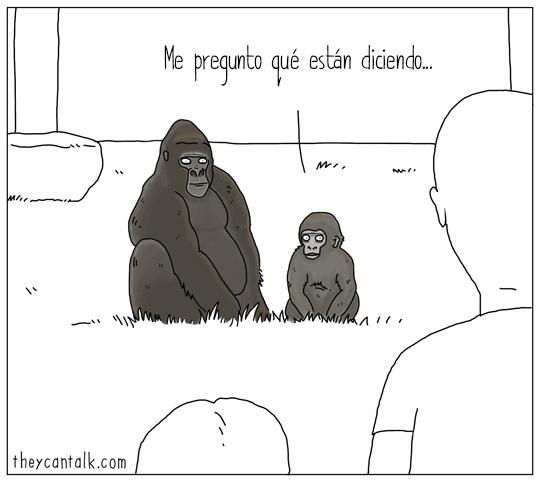 gorilas viendo humanos