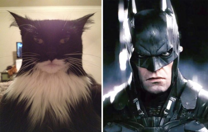 Parecido personajes caricaturas. Un gato con un parecido a Batman