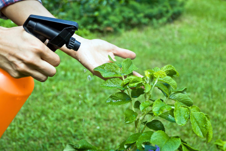 Rociador plantas para evitar plagas
