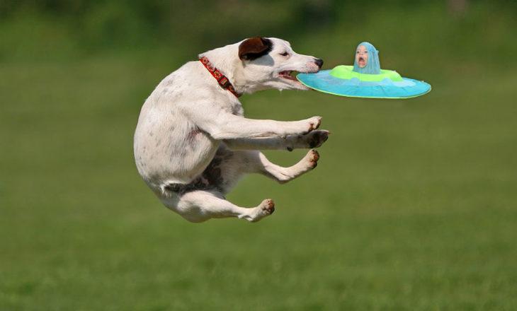 perro cachando un frisbee