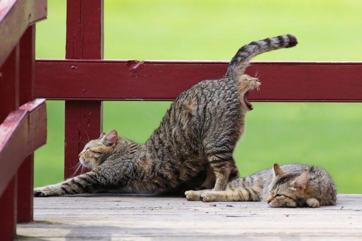 gato expulsado por el recto de otro