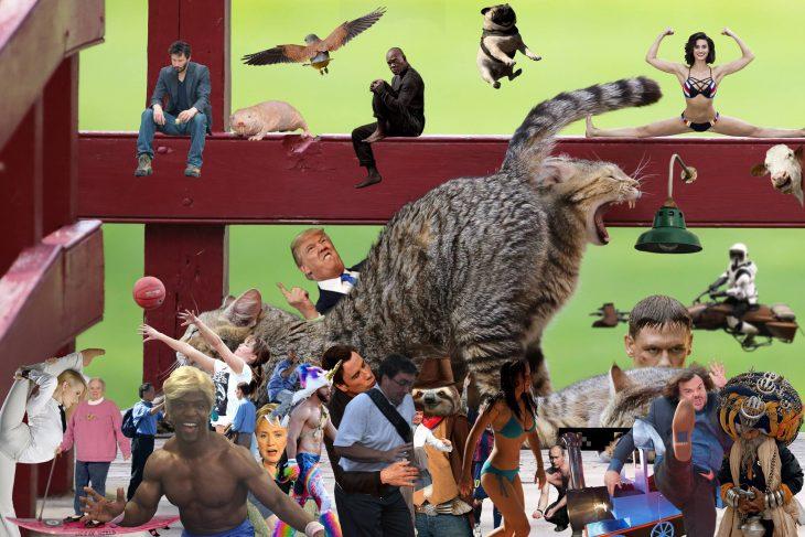 gato expulsando políticos