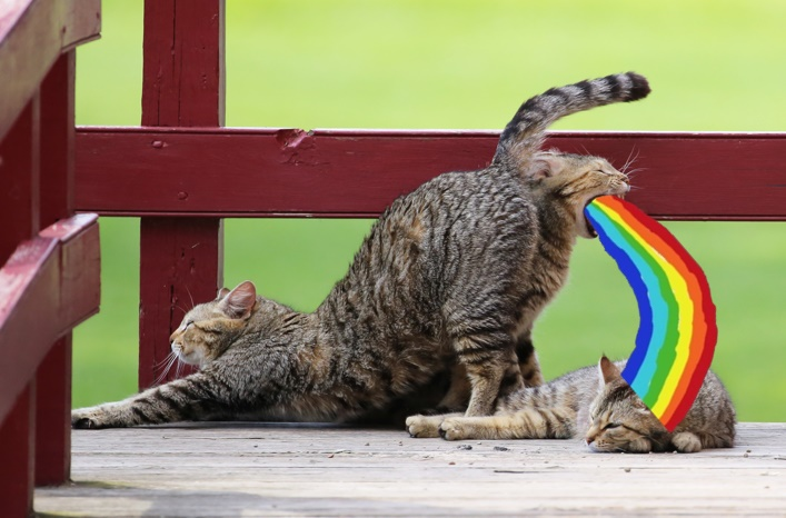 gato defecando arcoiris
