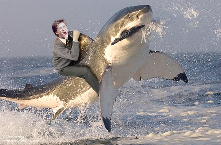 con un tiburón