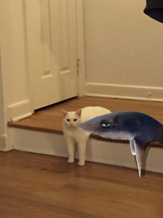 gatito con un tiburon en un lado