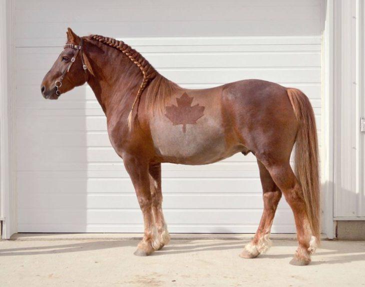 caballo patriotra