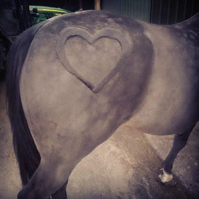 caballo con un trasero de corazon