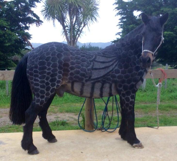 caballo con un corte medio extraño
