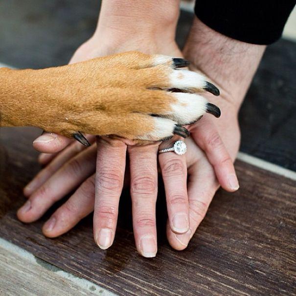 una propuesta con su perro