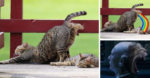 Internet trollea a gatitos tomando su siesta