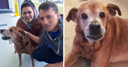 Iban a donar a un refugio animal ¡y salen con Rocky! perro de 17 años