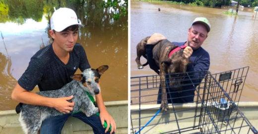 Abandonan a perros en inundación; un padre y su hijo los rescatan