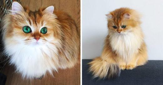Smoothie el gato mas bonito