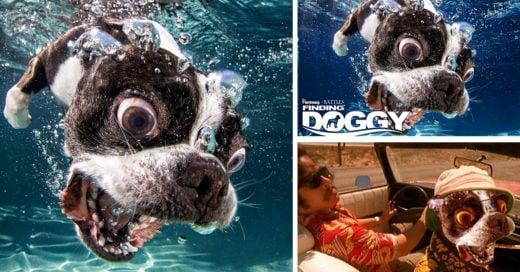 Internet hizo una épica batalla de Photoshop con este perro en el agua